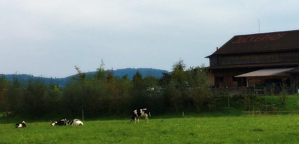 Happy Mum Blog - Ausflug zur Jucker Farm - Jucker Farm