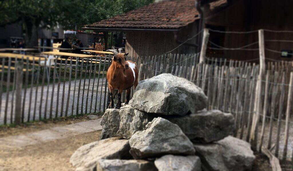 Happy Mum Blog - Ausflug zur Jucker Farm - Geissli