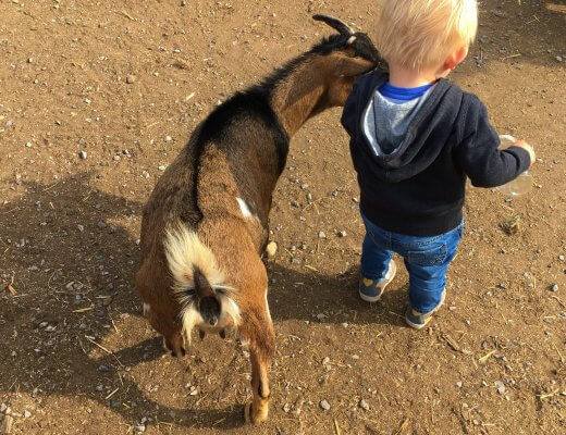 Happy Mum Blog - Ausflug Jucker Farm - Geissli und Maxim