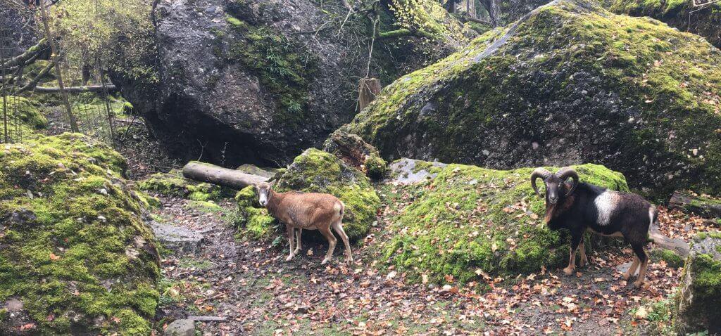 Happy Mum Blog - Auf Tierschau imTierpark Goldau - Gehege