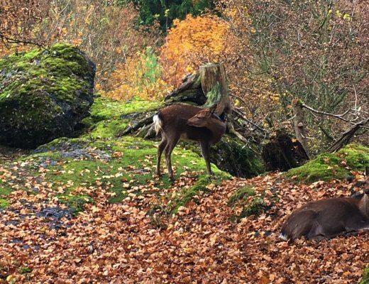 Happy Mum Blog - Auf Tierschau imTierpark Goldau - Reh kratzend