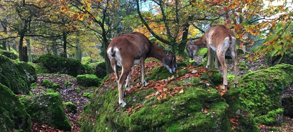 Happy Mum Blog - Tierpark Goldau - Rehe