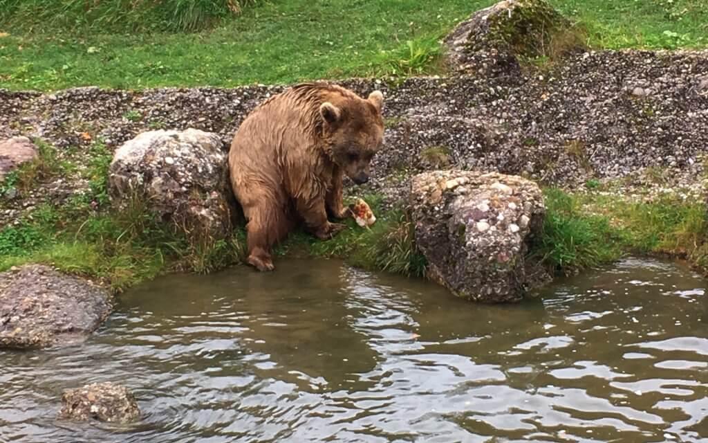 Happy Mum Blog - Tierpark Goldau - Bär